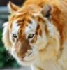 sibirian_cat: (белобрысое)