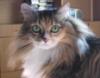 sibirian_cat: (о_о)