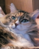 sibirian_cat: (отрешенное)