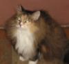 sibirian_cat: (вижу насквозь)