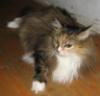 sibirian_cat: (и вечный бой)