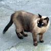 shr_cat: (Default)
