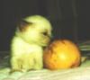 shr_cat: (kitten)