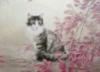 shr_cat: (и еще одна кошка)