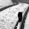 ann_t: (грустный кот)