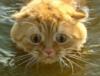 chiurlionis: (cat)