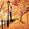 ginawdw: (Autumn)