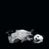 tsss: (panda)