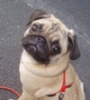 pug_dog: (Default)