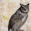 ulkopuolinen: (owl)
