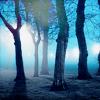 ulkopuolinen: (trees)