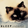 shimi: (sleep birman)