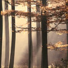 shimi: (autumn)