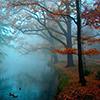 hallavaris: (misty forest)