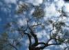 mejor_del_mundo: (tree)