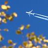 lx_photos: (Осенний полёт (без рамки))