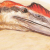pterosaur: (But trembling slip from cool Eternity)