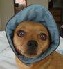 shirebound: (Pippin bonnet)