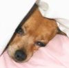 shirebound: (Pippin sleeping)
