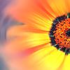 foolartist: (flower 2)