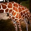 """lucida: credit: <lj user=""""awry"""" site=""""livejournal.com""""> (giraffe)"""