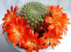 kaktus: (joy)
