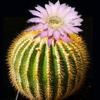 kaktus: (sympaty)