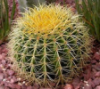 kaktus: (just)