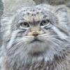 galeonis: (это котЪ и он смотрит на вас...)