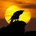 raven128: (закат)