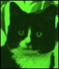 "tomtac: ""little green feline"" (little green man feline)"