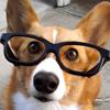 glassescorgi: (Hey there!)