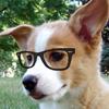 glassescorgi: (Is that... bacon?)