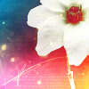 sigridhr: (Flower)