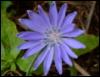 ptahin: (Цветочек)