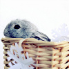 wattle_neurotic: (Animal - bunny in basket)