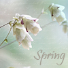 alenenok_8: (весна)