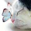 beauty_around_me: (котик и бабочка)