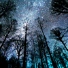 ofearthandstars: View of starry night through treetops (stars in the forest)