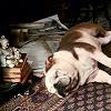 venetia_sassy: (SH // Gladstone oh no! dead dog?)