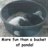 autographedcat: (More fun than a bucket of panda)