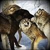 silverraven: (wolf 2)
