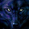 silverraven: (wolf 5)