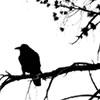 blackglance: (raven)