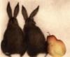 viktorplus: (и зайцы)