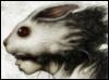 molotovo: (rabbit)