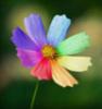 snejnaya: (цветок)