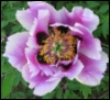 na_tasha: (цветок)