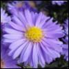 chudo_v_ladoni: (violet)