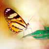 feathermoon_scarletsky: (Butterfly)